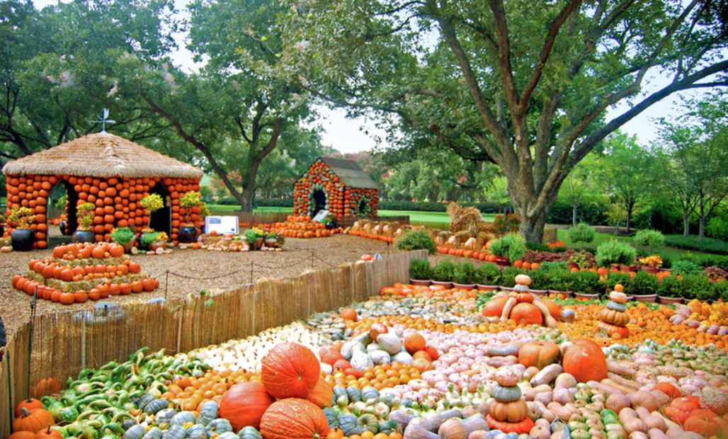 Pumpkins, Pumpkins and More Pumpkins at the Arboretum